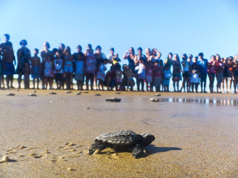 Tartarugas marinhas retornam ao litoral do Espírito Santo para reprodução